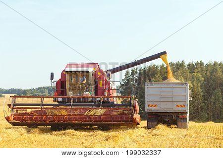 The Harvester Is Bulk Harvested Grain
