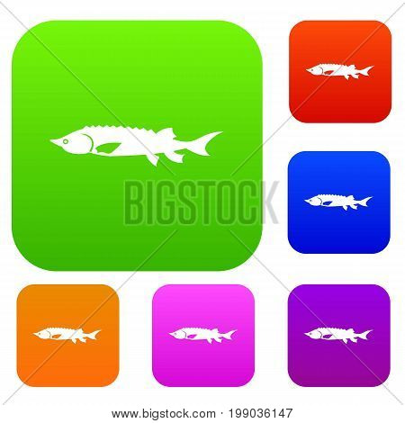 Fresh sturgeon fish set icon in different colors isolated vector illustration. Premium collection