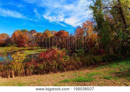 Autumn Rural Landscape - Autumn Oak Trees Near The Pond