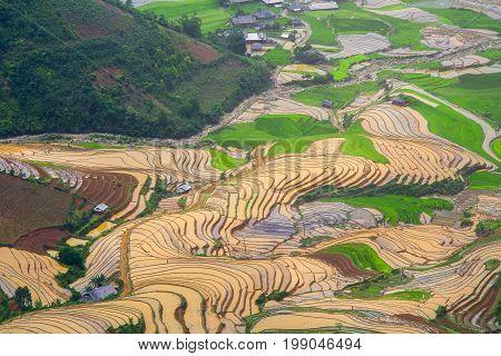 Terraced ricefield in water season at Mu Cang Chai , Vietnam