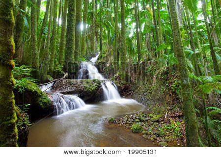 Waterfall in Tropical Palm Forest