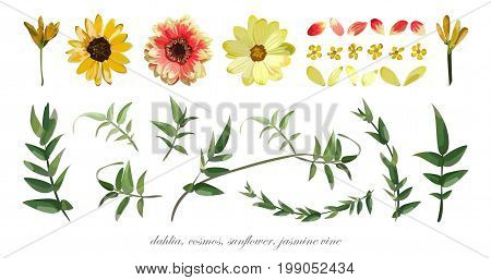 Vector flower elements set collection of Various Flowers Leaves Dahlia Cosmos Daisy Sunflower petals Jasmine vine Eucalyptus branch leaf. Yellow Orange Green watercolor garden beautiful wildflowers