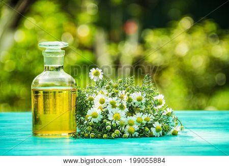 Camomile essential oil and a bunch of fresh camomile flowers. Copy space. Natural medicine.