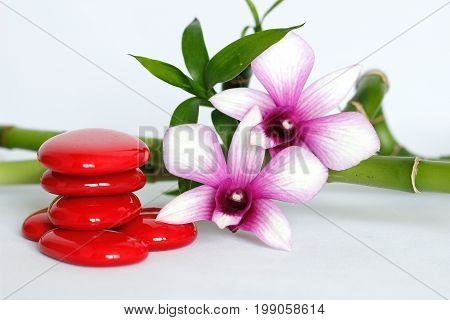 Red pebbles arranged in Zen lifestyle with a two-tone orchid on the right side of the twisted bamboo set behind the whole on a white background