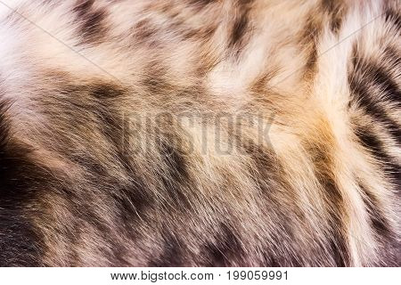 Background texture striped cat fur wool close up