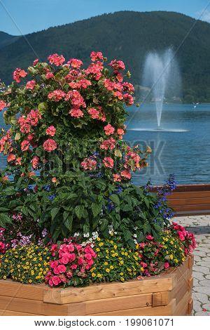 Colorful Flowerpot With Geranium, Salvia, Begonia, Sanvitalia And Nemesia