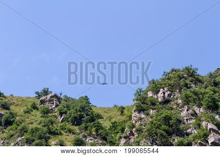 Mountain Landscape With A Soaring Eagle Over The Rocks