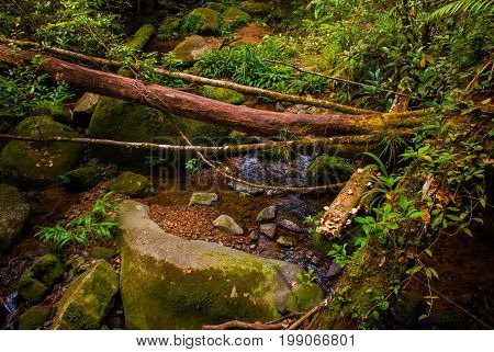 Branch And Creek. Tropical Rainforest Landscape, Sabah Borneo, Malaysia