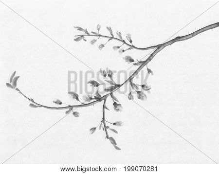 A branch of cherry tree flowering ink painting. Traditional chinese painting