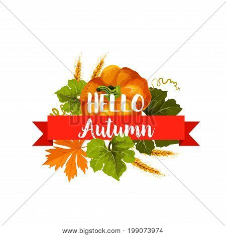 Hello Autumn icon of fall season leaf and harvest vegetable. Orange maple leaf and pumpkin veggies isolated symbol with ribbon banner and wheat ears. Autumn harvest and Thanksgiving Day themes design