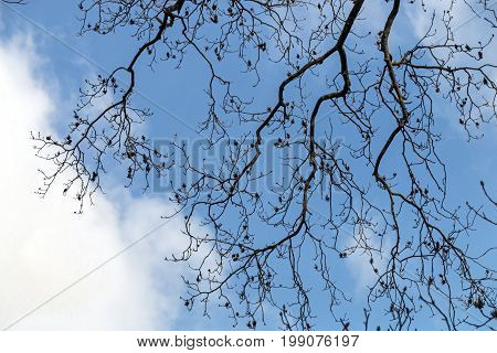 Branches Patterns And Textures Against Blue Cloudy Sky