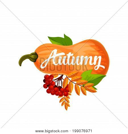 Autumn icon or poster for September seasonal holiday design. Vector pumpkin and autumn berry harvest with leaf fall or foliage of maple, oak or rowan and elm tree with rowanberry bunch