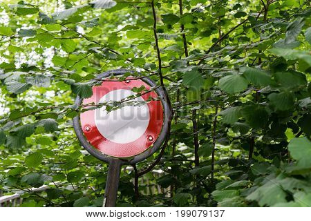 do not pass stop sign in forest overgrown by trees and leafs