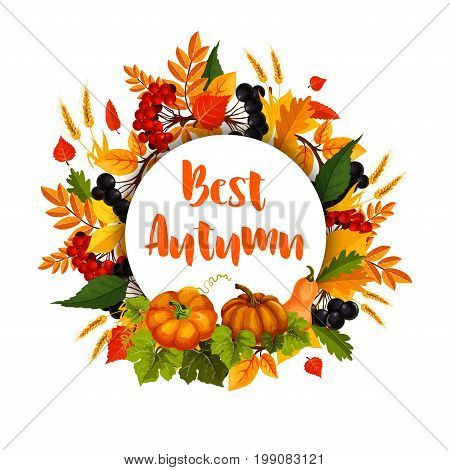 Autumn seasonal greeting poster of fall harvest and foliage. Vector design template of maple or birch leaf, oak acorn and pupmkin with rowan berries and wheat ot rye grain for Best Autumn holiday