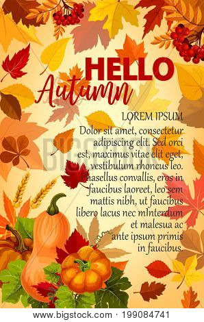 Hello Autumn banner with orange leaf and pumpkin. Yellow and red fallen foliage with pumpkin vegetable, wheat and rowanberry branch poster for Autumn harvest celebration and Thanksgiving Day design