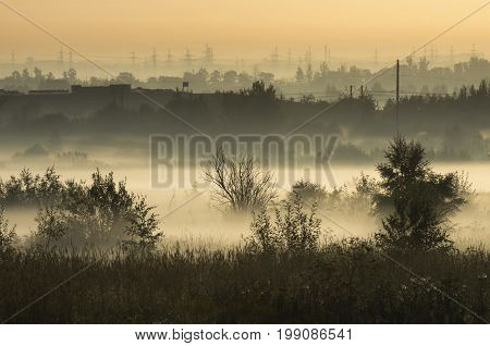 Coppice in the morning fog on the outskirts of the city in the background of power lines
