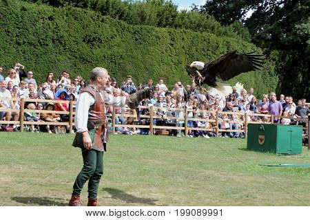 Warwick, Uk - July 22 2017: A Falconer Raises His Gauntlet As His Bald Eagle Comes In To Land Watche