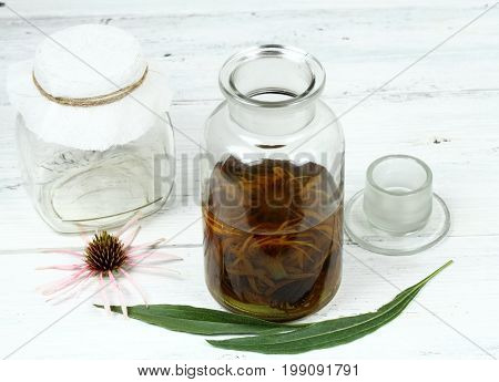 Tincture from flower heads of narrow leaf purple cone flower ready for filtering. Echinacea angustifolia the most medicinal from all Echinacea family