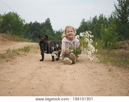 A little girl with a bouquet of daisies sits on a rural road. Dog black French bulldog. The child laughs happily. Summer nature rural