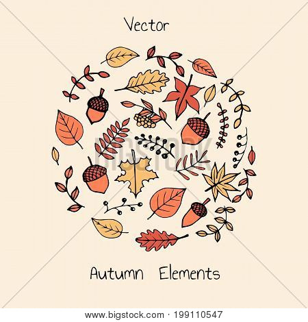 Colorful vector hand drawn set of autumn elements: foliage berries and acorns. Maple sycamore birch beech and oak tree leaves.