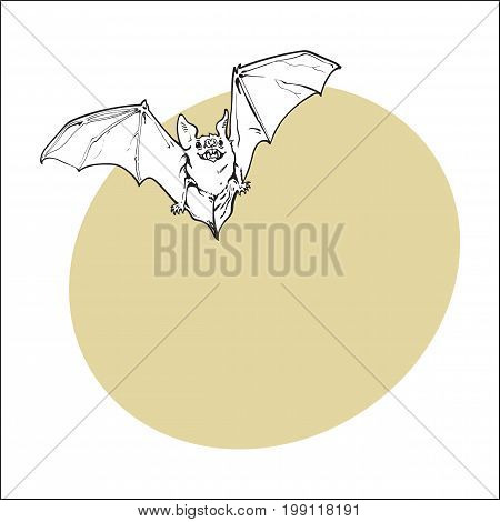 Scary flying Halloween vampire bat, sketch style vector illustration with space for text. Hand drawn, sketch style vampire bat flying with wide spread wings, Halloween object