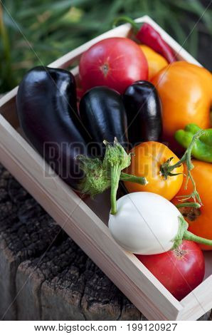 Fresh vegetables, tomatoes, peppers, aubergines, chilli pepper in a wooden box on a stump in the open air in the garden. Vegetable background.