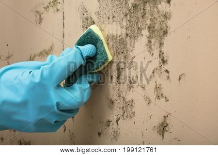 Close-up Of A Housekeeper's0 Hand Wearing Glove Cleaning Stained Wall With Sponge