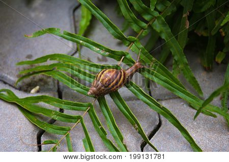 Snail on the small tree in the garden. Snails are walking around to find food in slow motion.