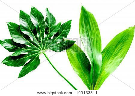 big jungle leafs on white background top view.