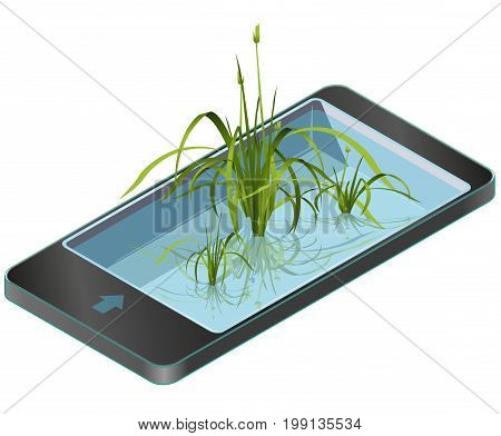 Green reed and water plants in mobile phone. Isometric clump of reed growing in pool, lake or pond. Isolated individual flower bamboo reed in communication technology. Master vector illustration.