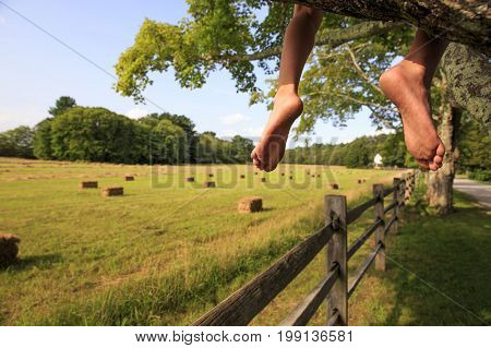 barefoot kid sitting on a tree. child sitting on a branch with dangling feet. Empty space for your text