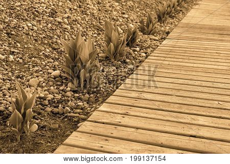 bushes of flower leaves and wooden flooring closeup on the pebble beach with sharpness in the foreground in the photo with effect sepia