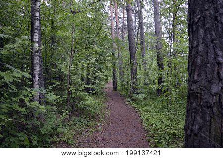 plant hiking walk outdoors leaf grass footpath