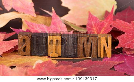 Autumn wood lettering surrounded by colorful maple leaves