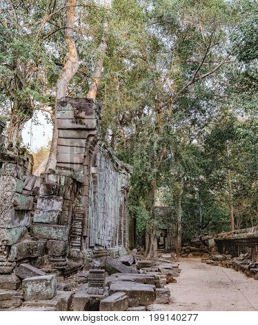 Ta Prohm Temple in Siem Reap, Cambodia. Ta Prohm with trees growing out of the ruins is in much the same condition in which it was found. Ancient Khmer architecture of Angkor Complex