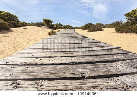 Wooden walkway in the Asperillo dunes Donana Natural Park Matalascanas Huelva province Costa de la Luz Andalusia Spain