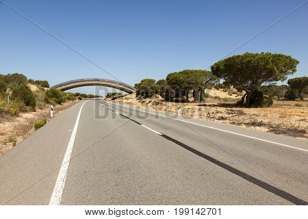 Road with a wildlife overpass in the Donana national park. Andalusia Spain