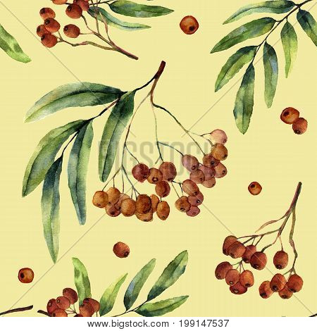 Watercolor autumn pattern with rowan. Hand painted mountain-ashe fruit with leaves and branch isolated on yellow background. Botanical illustration for design