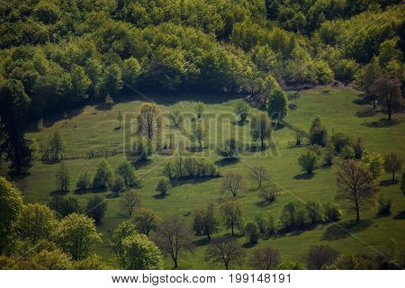 Romania, Transylvania. Nature in the country, meadow and forest edge.