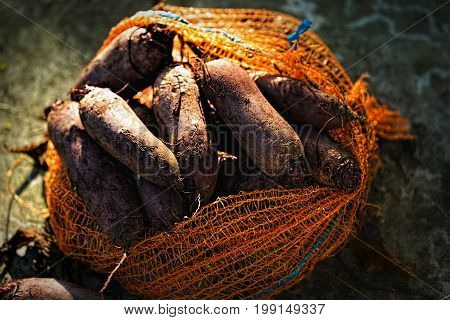 Long shaped beetroots in orange nest bag on green surface