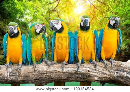 Blue-and-Gold Macaw against tropical waterfall forest background
