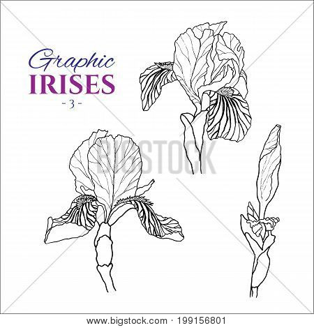 Graphic illustration of irises from different angles, set part 3. Hand drawn flowers and buds in line art style. Beautiful blossoms for romantic design of wedding invitation, advertising, booklets.