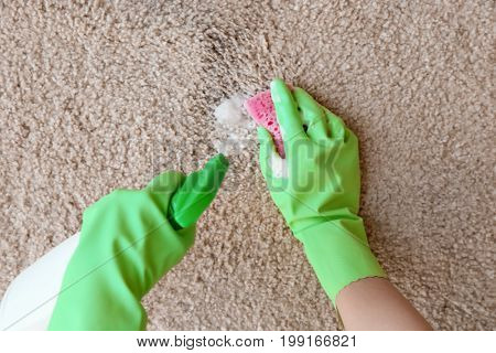 Hands in rubber gloves cleaning carpet with sponge and detergent