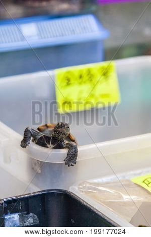 A pet turtle climbs out of its box in one of many Tung Choi Street pet shops. The area better known as Goldfish Market is lined on either side with shops and aquariums selling fish and aquatic pets.