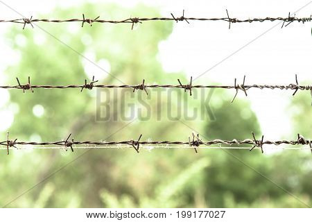 rusty barbed wire and green natural backgruond.