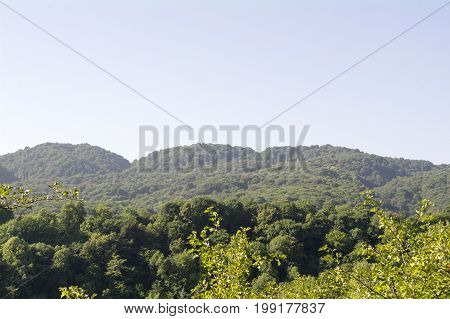 Hills covered with green trees in the foothills of the Caucasus