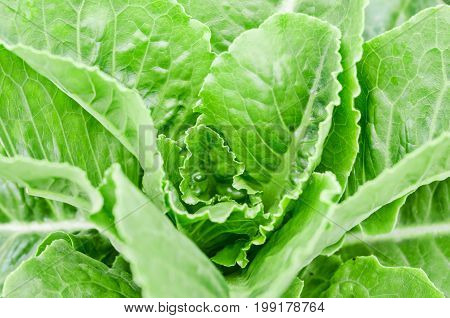 hydroponics vegetable that no need any ground for plant