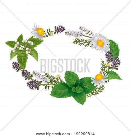 Vector oval ornament of herbs and flowers for labels of herbal tea or herbal shampoo