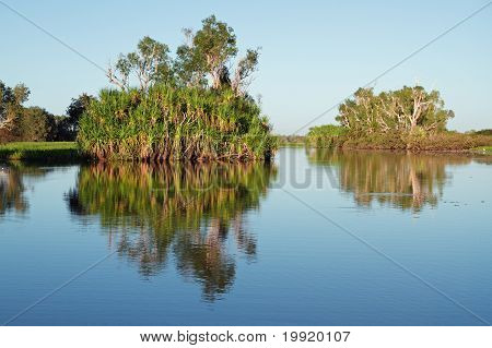 Trees With Reflections, Australia