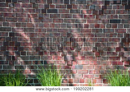 Old red brick wall background with sunshine and grass in the bottom